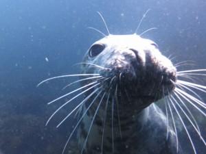 Seal2